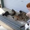 海外「猫好きな人必見!」田代島通称ねこ島はたくさんの猫に会える島
