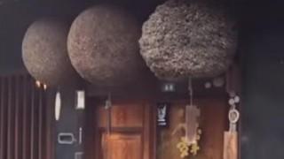 海外「おっきなボール!」杉玉が酒屋に吊るされている意味を知っていますか?