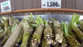 海外「長野にある観光スポット」究極のワサビを体験してみた!
