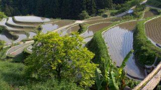 海外「緑と水と水車小屋」樫原の棚田・徳島に癒される