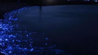 海外「青色LEDみたいで綺麗!」春の深夜見られるホタルイカの身投げに世界も感動!
