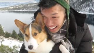 海外「犬が新雪に大はしゃぎ!」ぴょんぴょん跳ねる、雪の日のコーギーが可愛いすぎる!