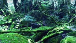海外「日本が愛するのも納得の景色」屋久島・白谷雲水峡は、豊かな自然が残る島