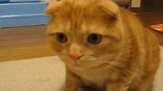 海外「驚きを隠せない猫の反応が可愛すぎる!」子猫と猫が出会った!未知との遭遇 猫編