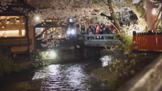 海外「綺麗すぎる!」京都の桜 着物美人と夜桜観光