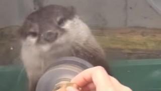 海外「日本の水族館には敵わない!」絶対行くべき、カワウソにタッチに胸キュン!