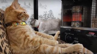 海外「あったまるにぁ~!」ストーブ前でくつろぐ猫