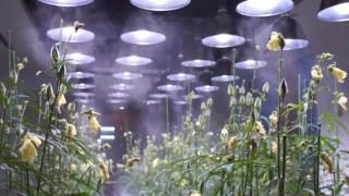 海外「日本の近未来都市」未来の職場環境 アーバンファーム