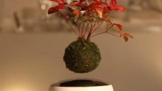 海外「くるくる浮かぶ植物!」空中盆栽に癒されたい!