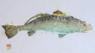 海外「未知の世界、魚のアートで魅了!」魚拓のテクニックは見てるだけでとても面白い!