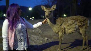 海外「ジブリ美術館と日本の観光地をめぐる!」旅を満喫