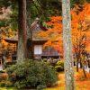 海外「京都の庭園に感動!」京都秋艶に紅葉の紅色を絶賛