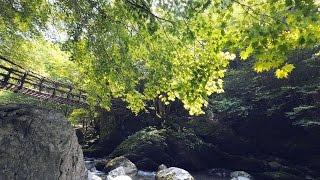 海外「澄んだ水と自然が美しい!」奥祖谷二重かずら橋・徳島の粗さを体感