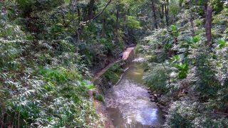 海外「東京で味わう自然の景色」等々力渓谷の遊歩道は心地よい空間