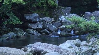 海外「心地いい空気感でリラックス!」白谷雲水峡・屋久島の自然を体感