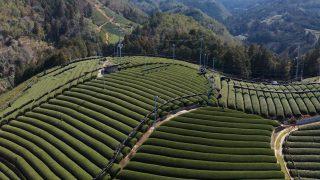 海外「宇治茶の産地!和束 緑茶の魅力」日本茶の作り方と知識を学ぶ旅