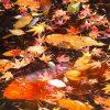 海外「長野の人気散策スポット」軽井沢の紅葉 雲場池からの景色を眺めてみた