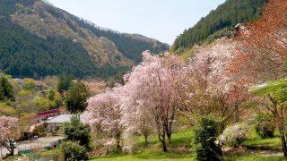 海外「東京 多摩のどかな原風景が残る」檜原村の桜を見に行ってみた